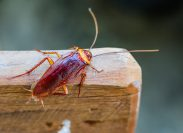 cockroach on piece of wood outdoors