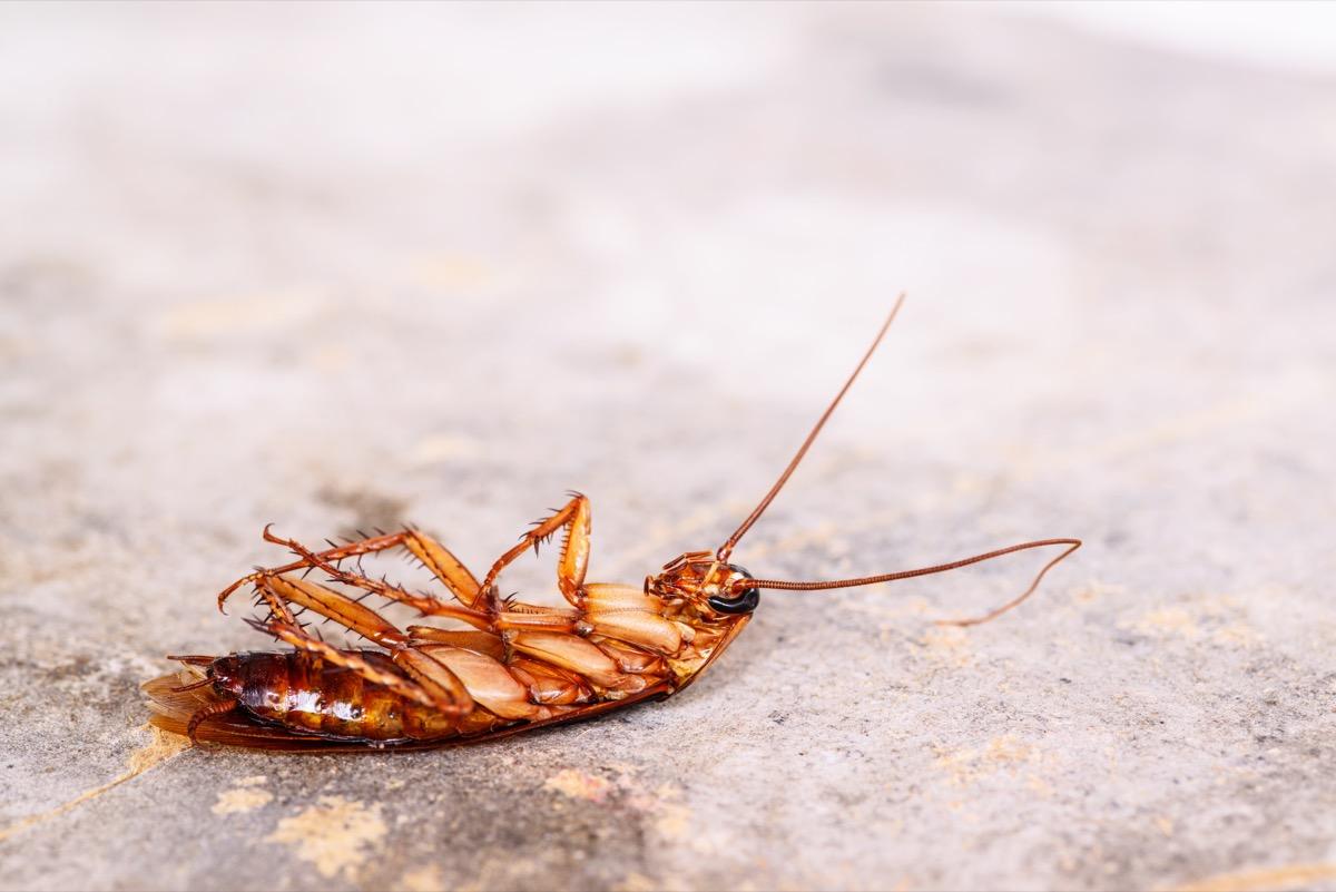 dead roach on concrete floor