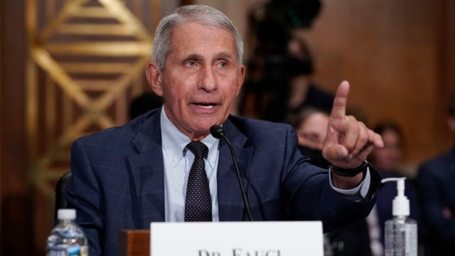 Dr. Anthony Fauci testifying before congress