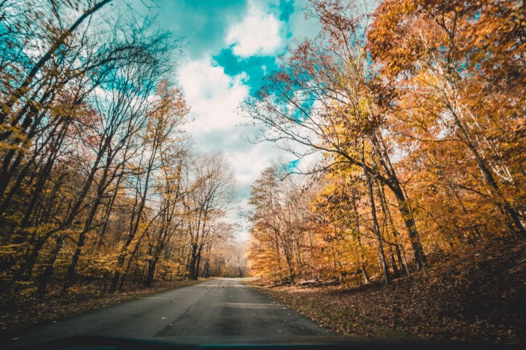 a road and trees in Louisville, near Indiana Hills, Kentucky