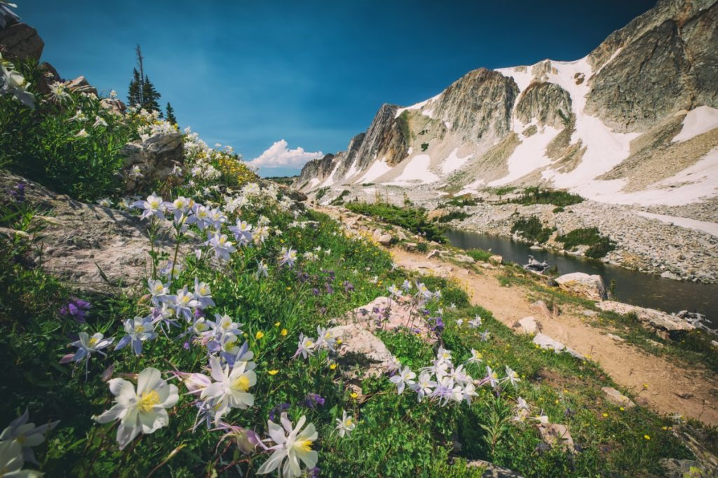 a mountain, trail, and flowers in Laramie County, which Ranchettes, Wyoming is a part of