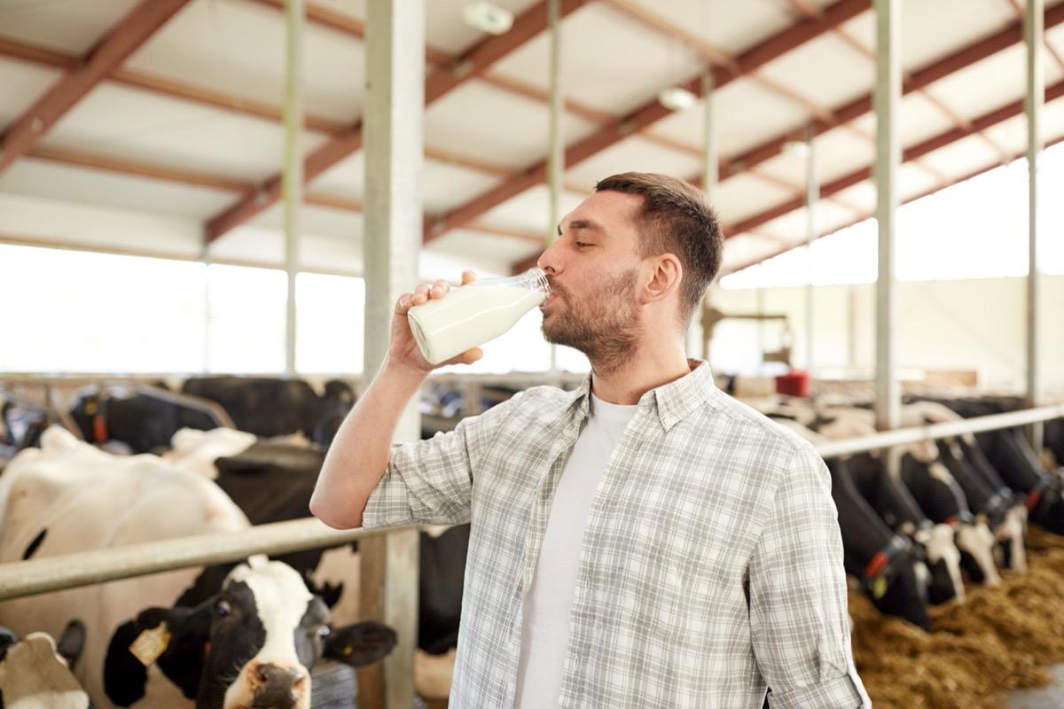man drinking raw milk on farm