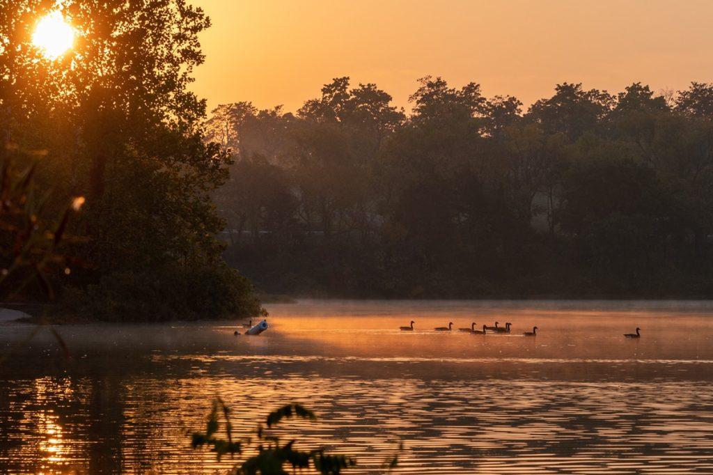 ducks on a lake in Kansas