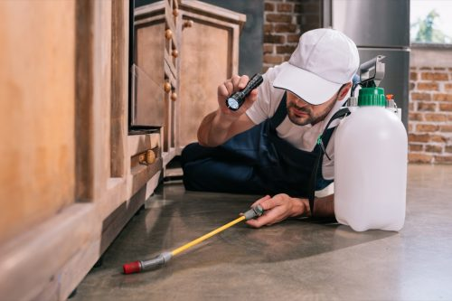 pest control worker lying on floor and spraying pesticides under cabinet in kitchen