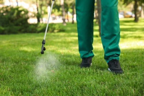 Worker spraying pesticide onto green lawn outdoors