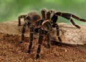 tarantula on piece of wood