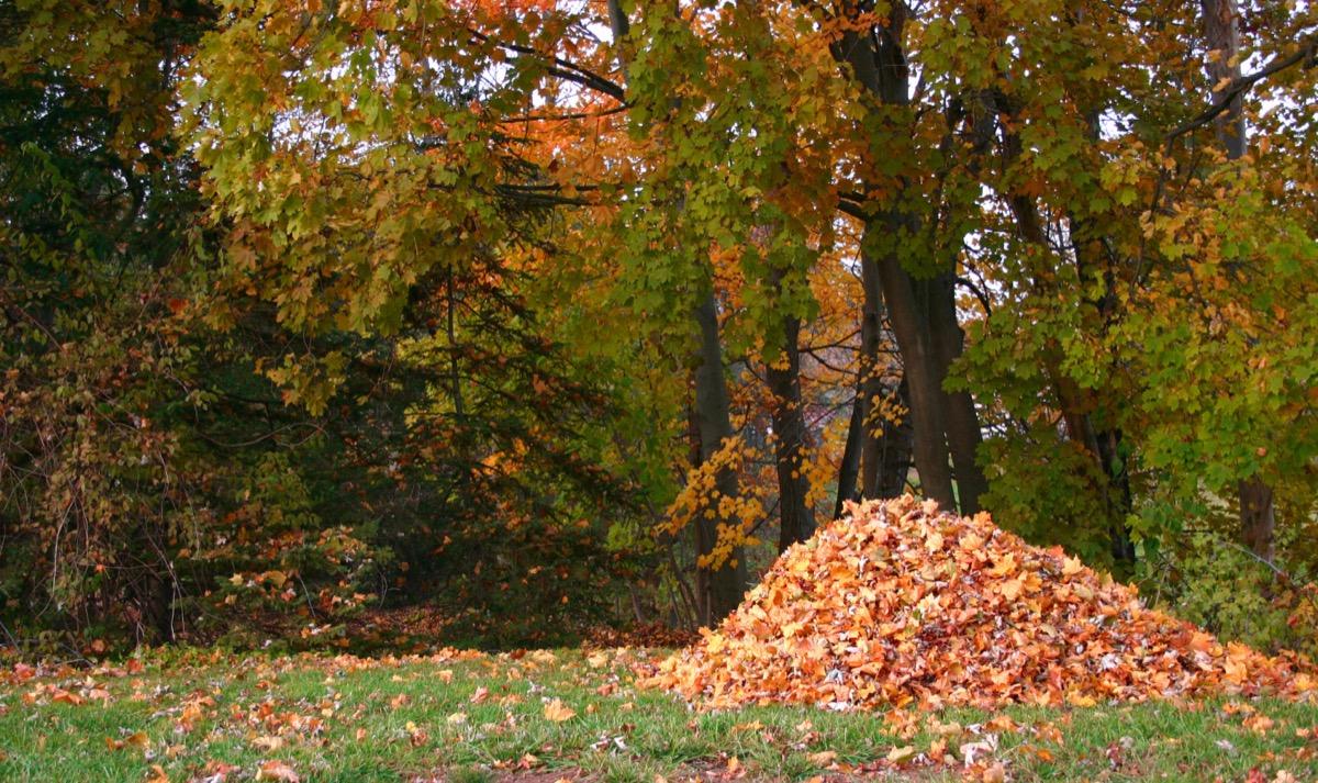 leaf pile in backyard