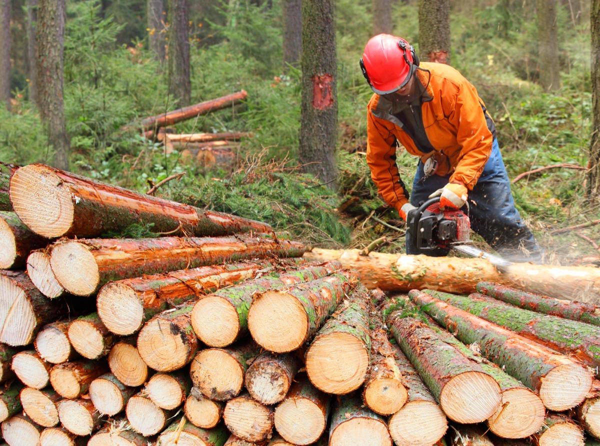 lumberjack chopping logs in forest