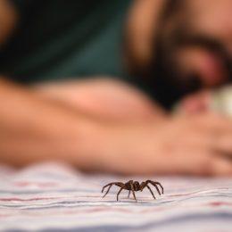 man sleeping next to spider in bed