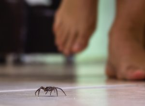 person in bare feet walking on tire floor with spider in front of them