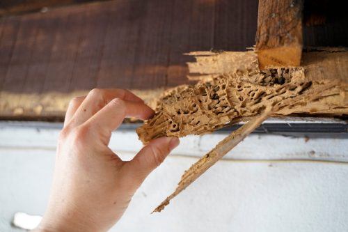Wood, part of roof house after attack of termite. Peril from insect concept.