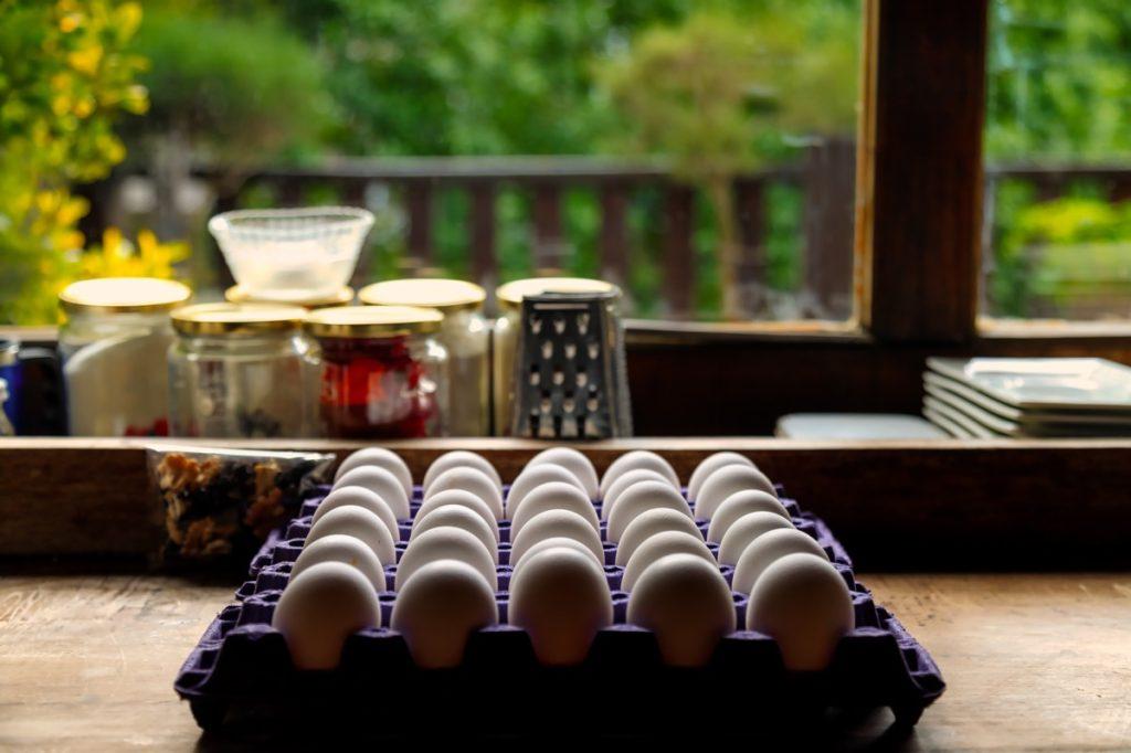 Carton of eggs on counter