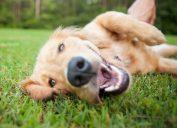 cute dog smiling