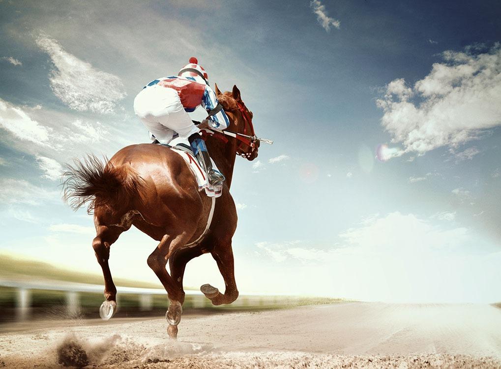 jockey, horse
