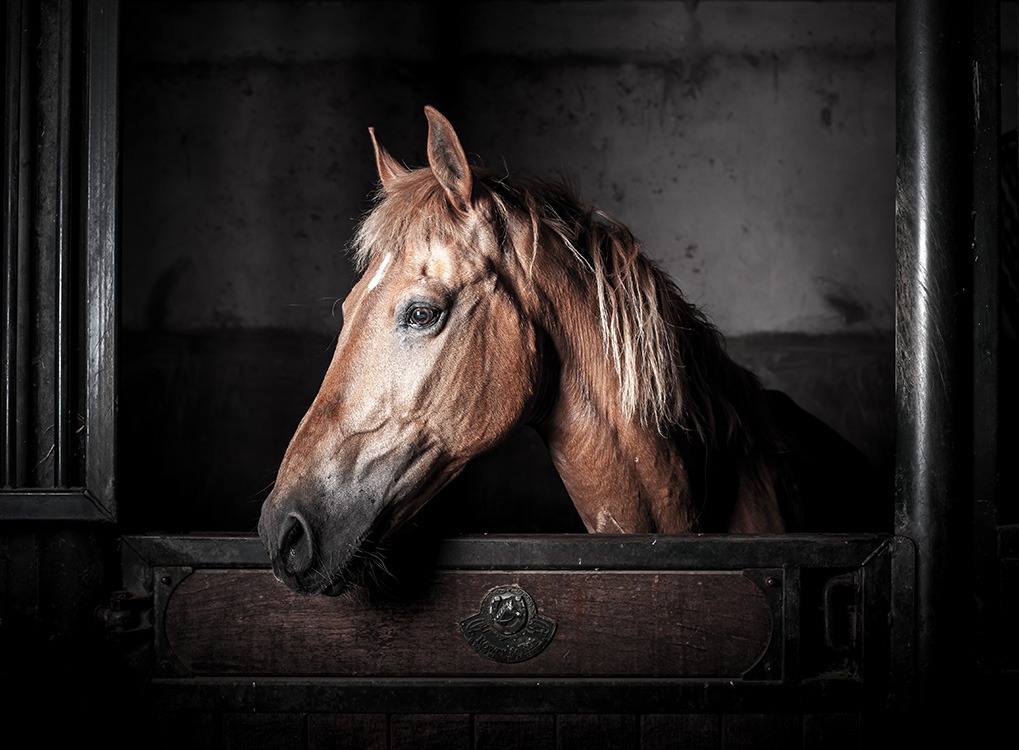 Horse Animals Who Are Real-Life Heroes